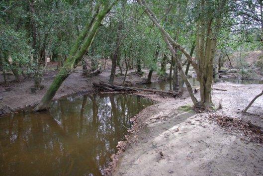 Woodland Stream and natural dam 2